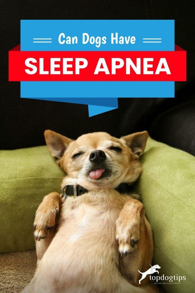 Can Dogs Have Sleep Apnea