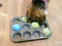 DIY Dog Puzzles