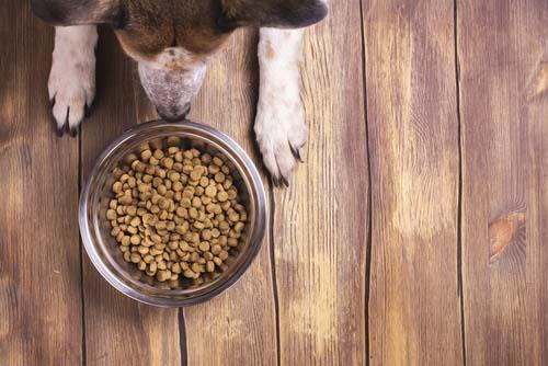 dog looking at dog food