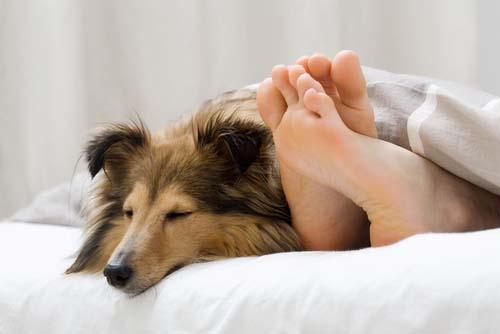 dog sleeping next to owners feet