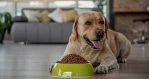 25 Best Dog Food Brands in Europe
