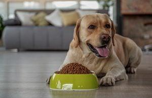 25 Best Dog Food Brands in Europe