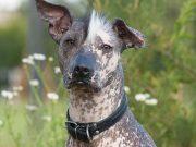 11 Most Popular Exotic Dog Breeds