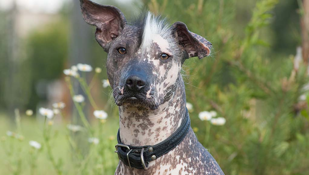 11 Most Popular Exotic Dog Breeds