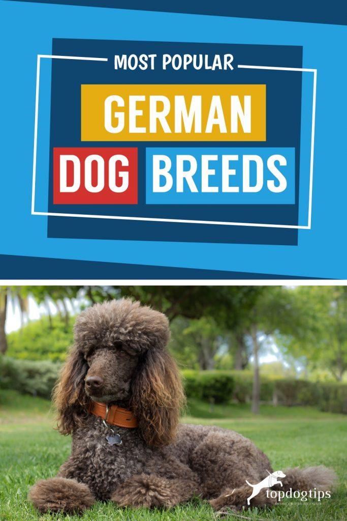 Most-popular-german-dog-breeds