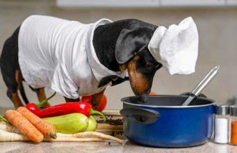 Reasons to Start Making Dog Food at Home