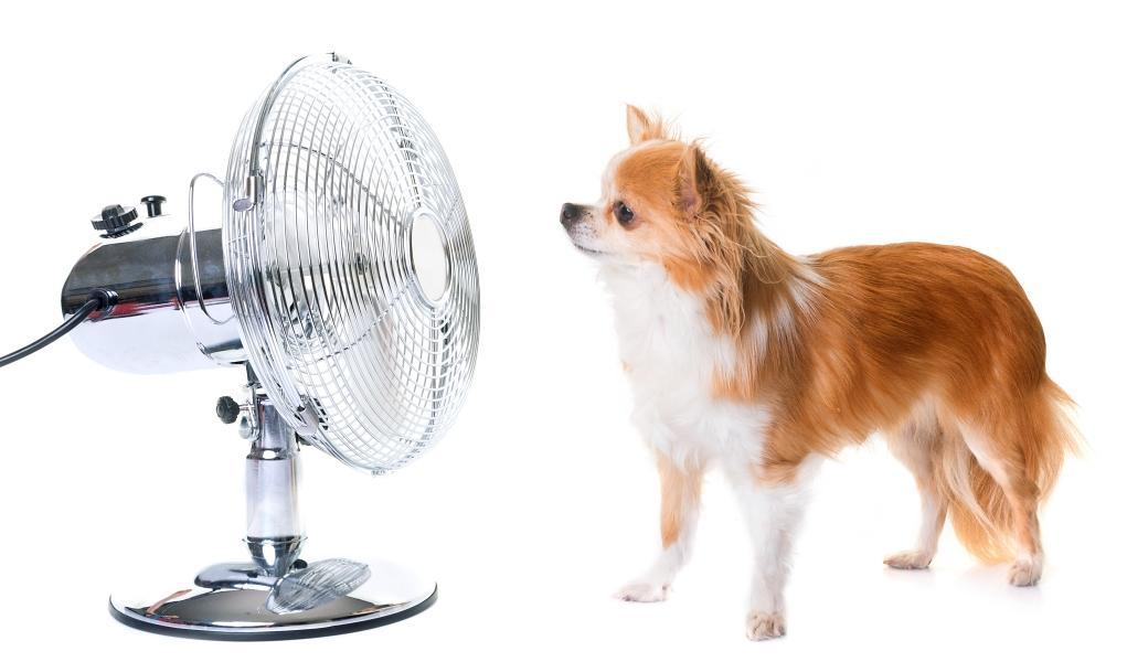dog in front of fan