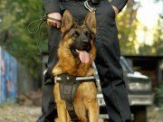 K9 Dog Breeds