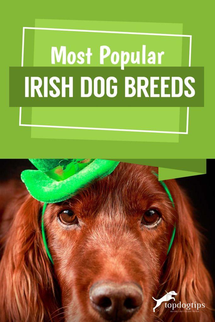 Most Popular Irish Dog Breeds