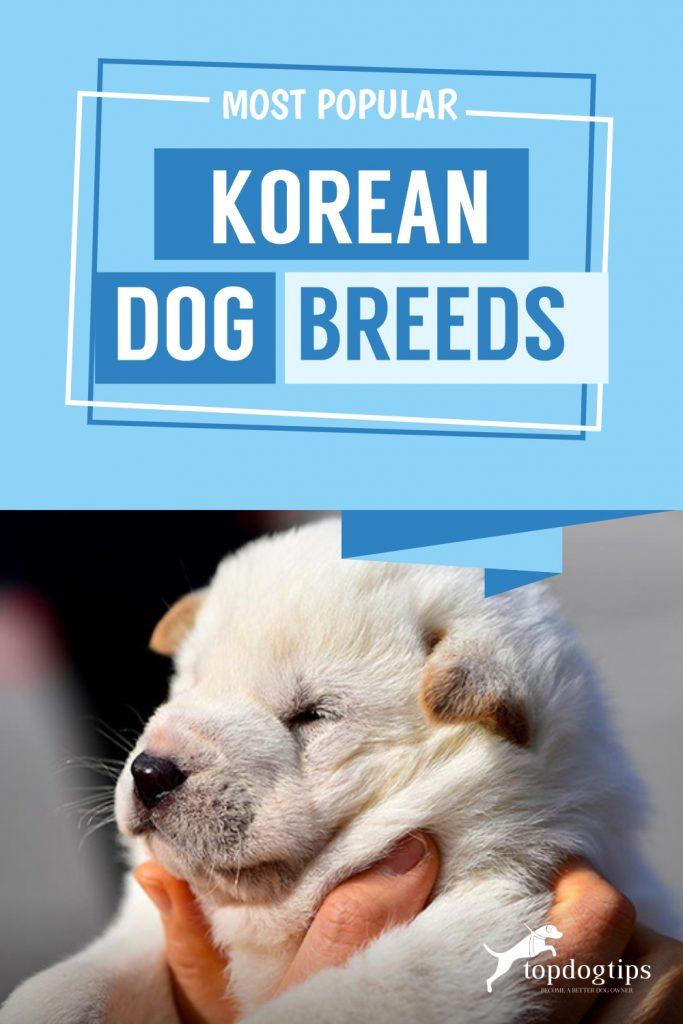 Most Popular Korean Dog Breeds
