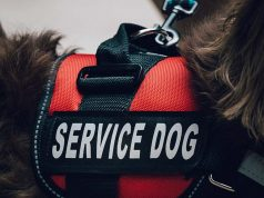 5 Best Service Dog Vests and Harnesses for Working Dogs