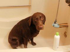 DIY Dog Conditioner