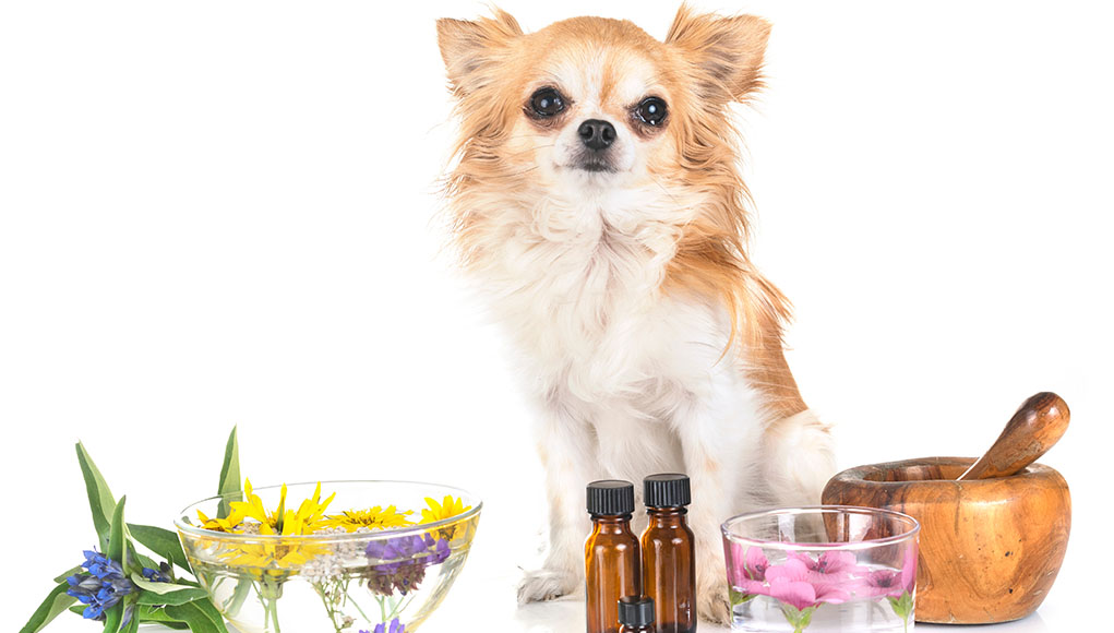 Herbal remedies for dogs
