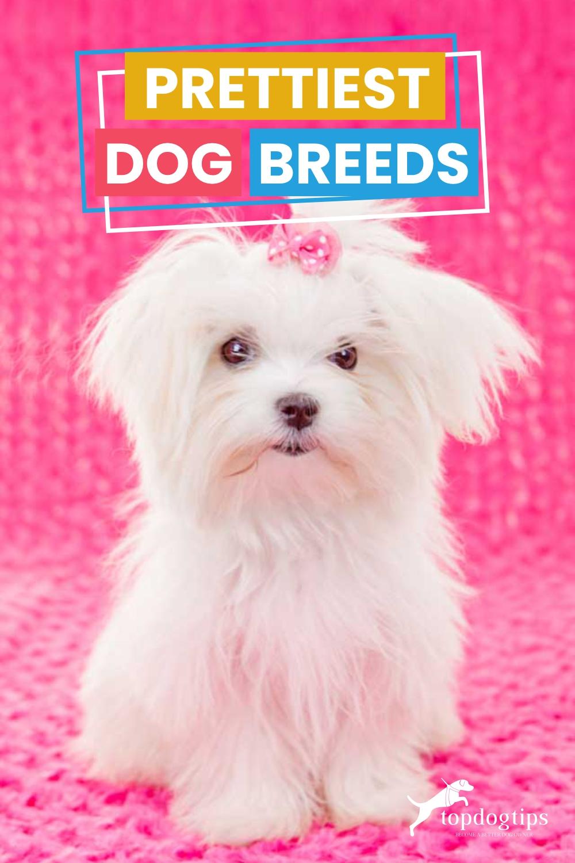 Prettiest Dog Breeds