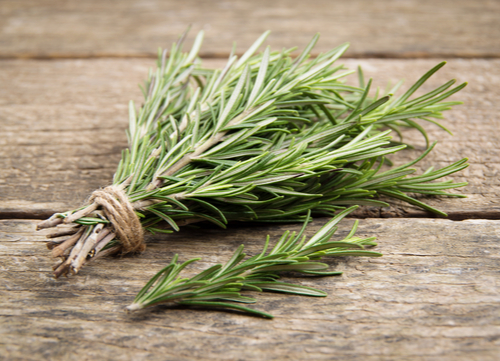 dog tick home remedies rosemary