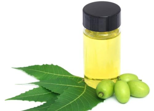 dog tick home remedies neem oil