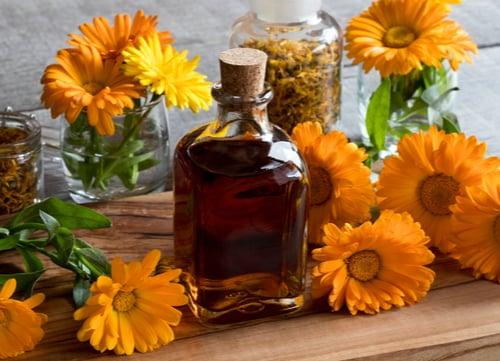 herbal dog remedies Calendula Flowers