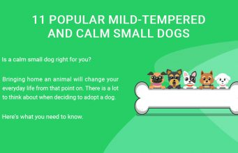 11 Popular Mild-Tempered and Calm Small Dogs