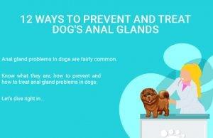 Treat Dog's Anal Glands