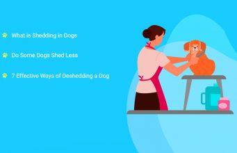 7 Ways of Deshedding a Dog