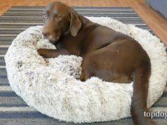 BingoPaw Donut-Shaped Dog Bed