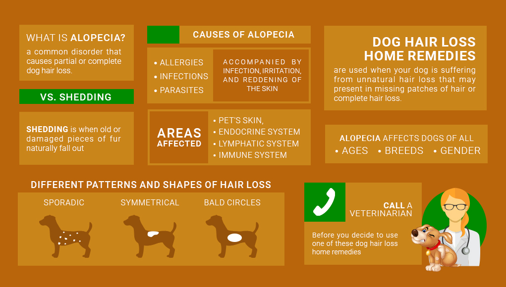 Dog Hair Loss Home Remedies 2