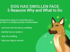Dog Swollen Face