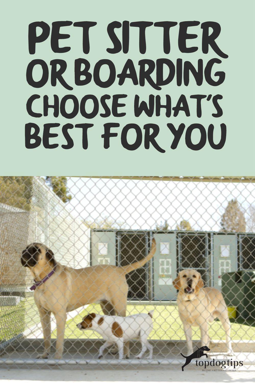 Pet Sitter or Boarding