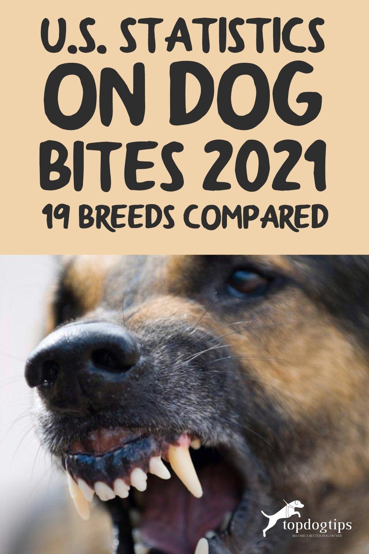 U.S. Statistics on Dog Bites 2021 (19 Breeds Compared)