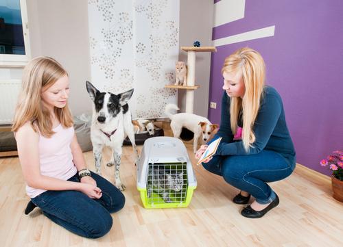 pet-sitter-or-boarding