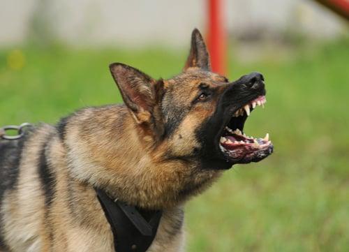 us dog bit statistics german shepherd