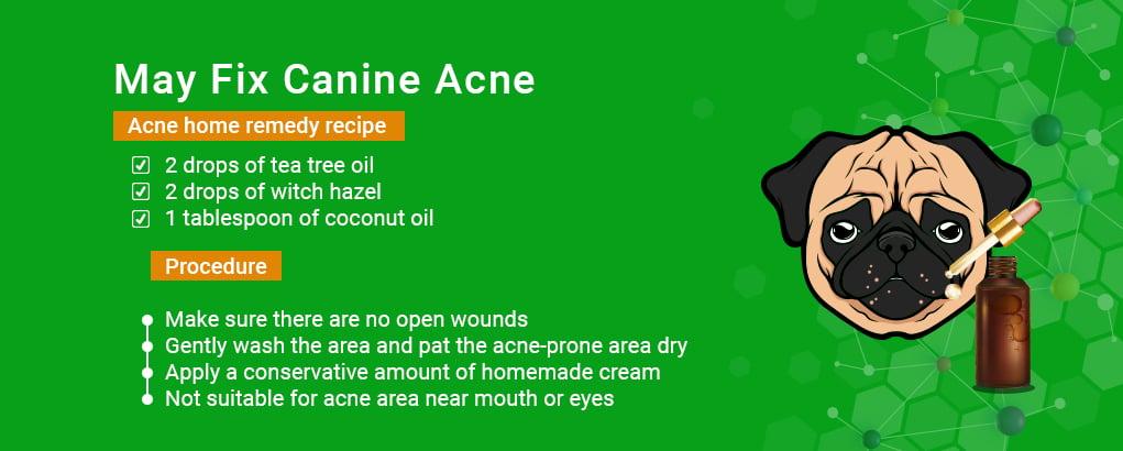 benefits of tea tree oil,dog acne