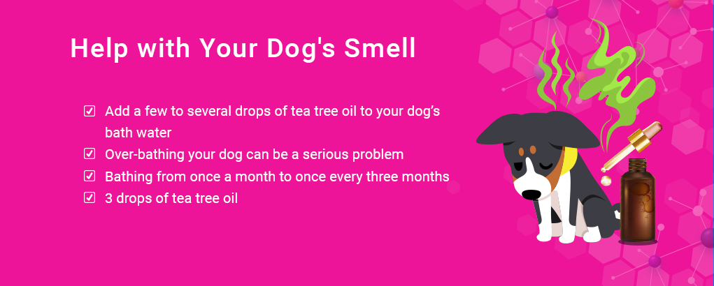 tea tree oil, dog smell