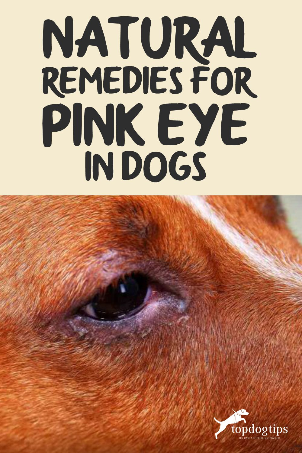 Pink Eye in Dogs