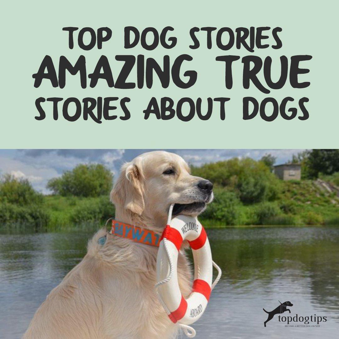 TOP DOG STORIES