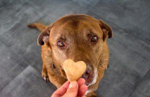 dog treats for liver disease