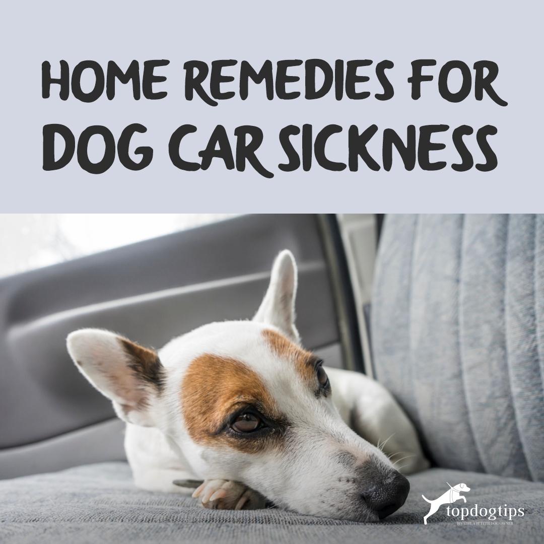 car sick dog