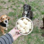Ice cream for dogs