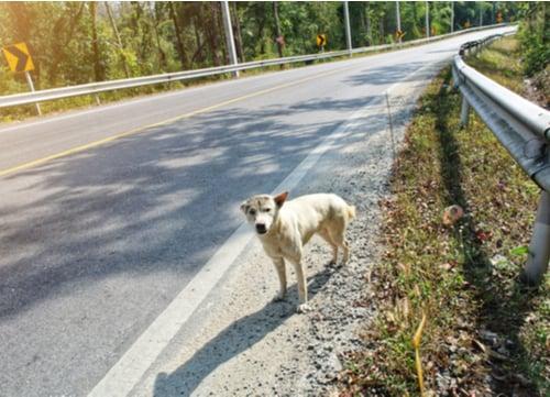 walk a dog without a leash