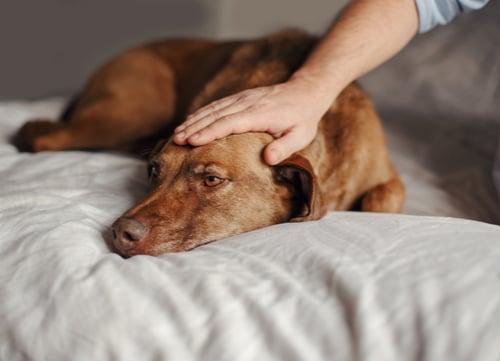 Dog Sounds Stomach Noises