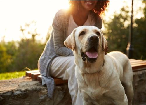 Natural antibiotics Labrador Retriever