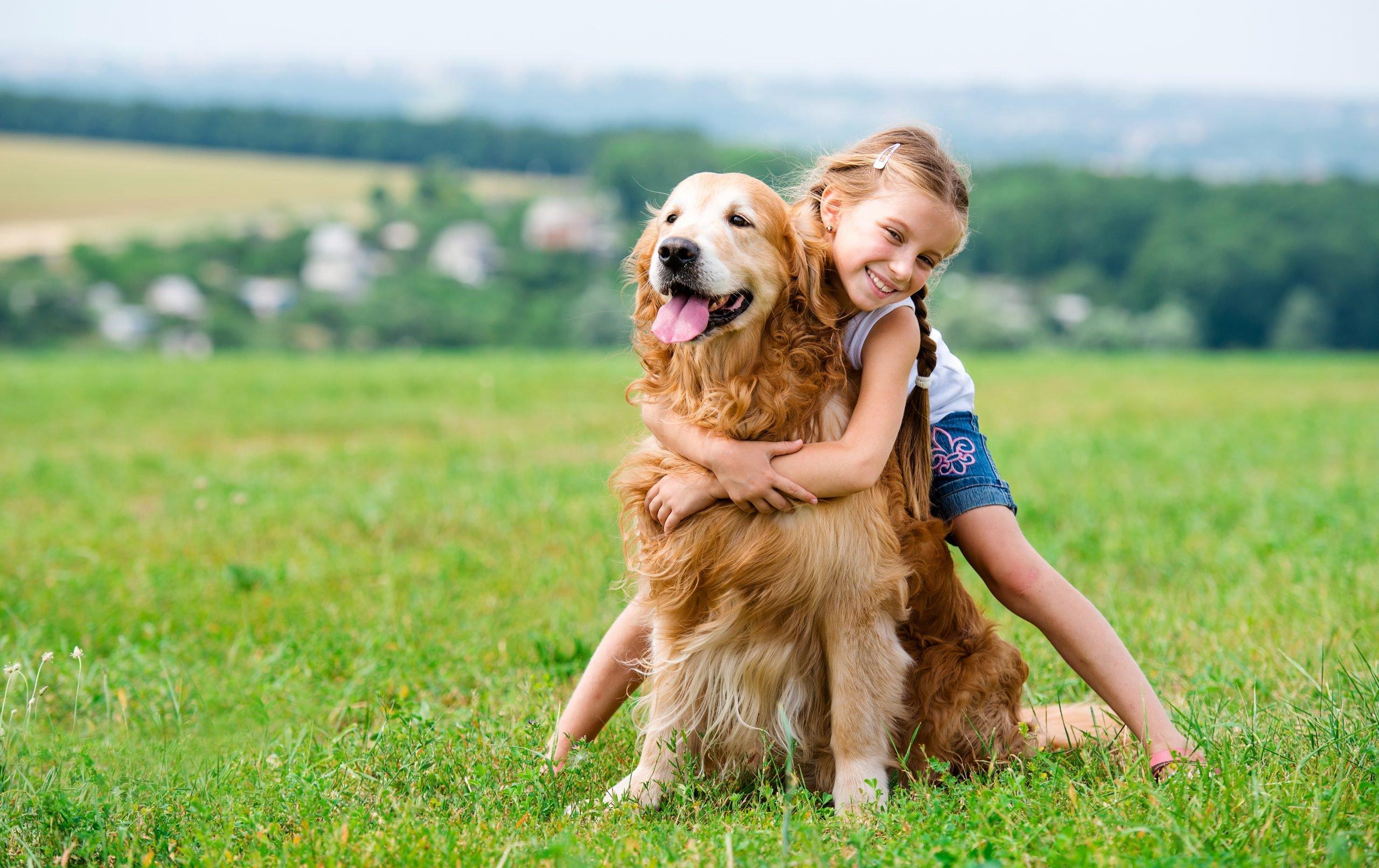 Little girl with golden retriever adopting a dog