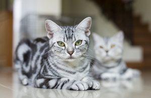 10 best cat breeds