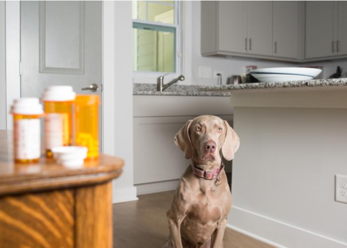 pet medication sites