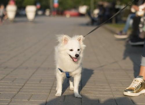 Dog on hot pavement