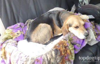DIY Dog Car Seat
