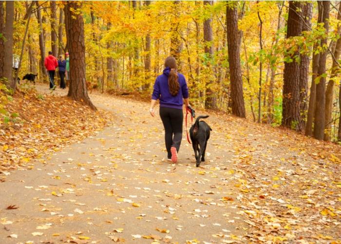Exercise for better dog joint health