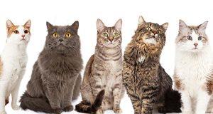 Popular Cat Breeds
