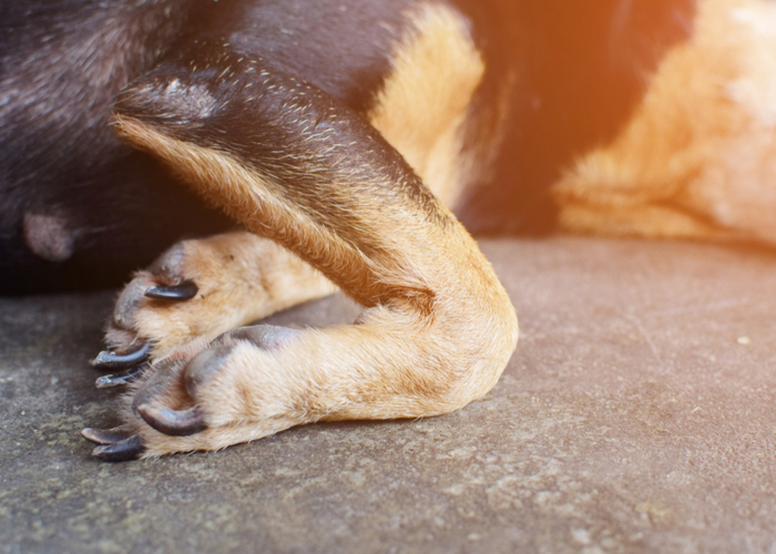Dog's joint and joint health