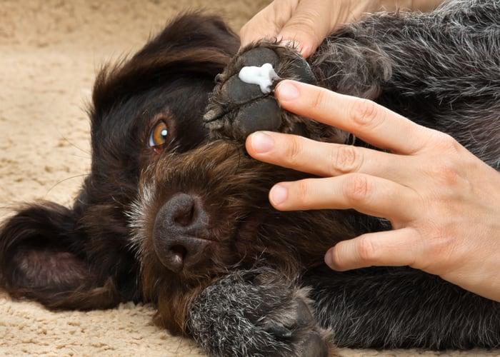 Moisturizing dog paws for protection